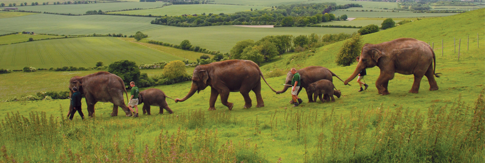 elephants enjoying stroll on the downs