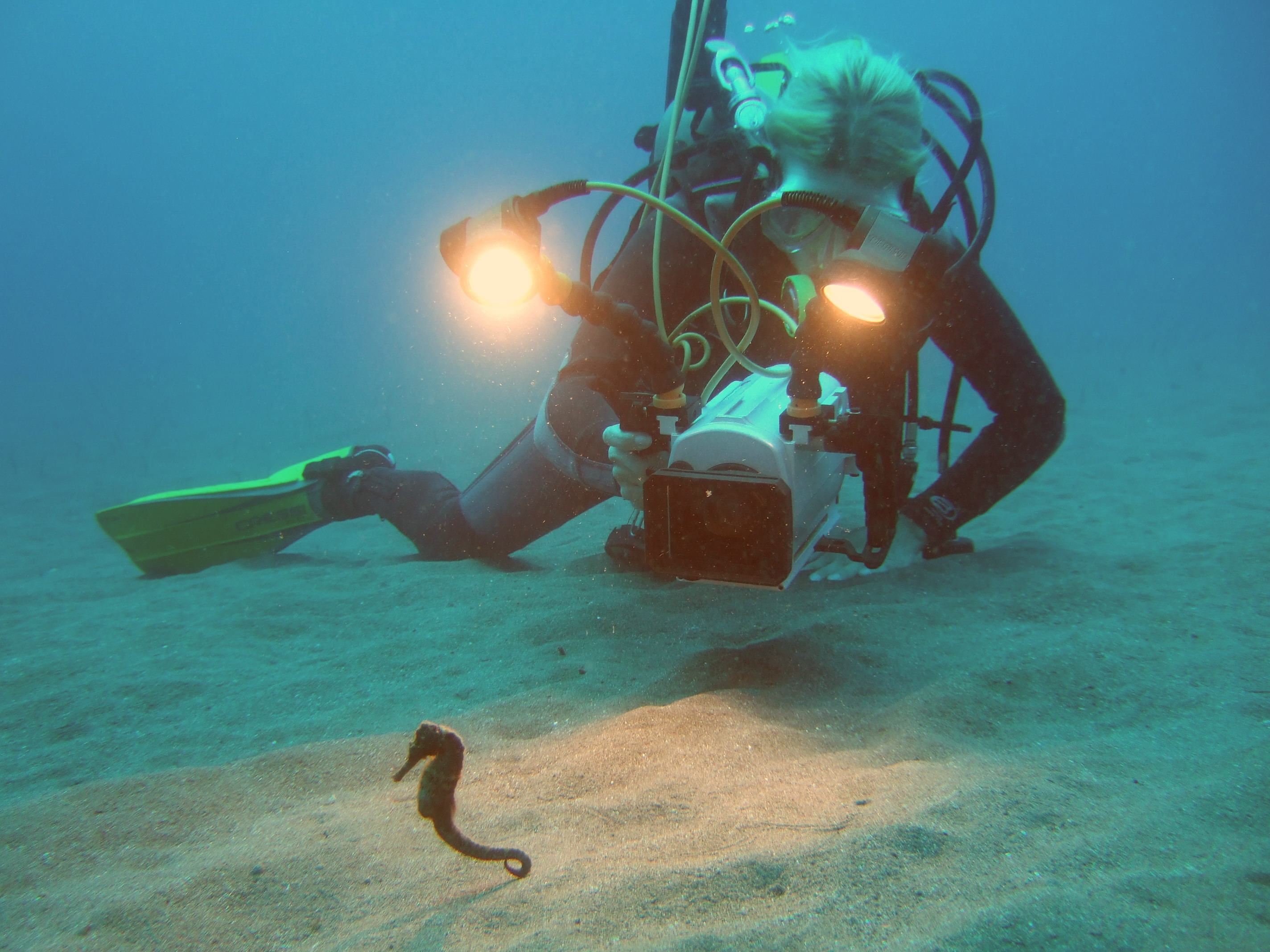 Filming seahorses in the Caribbean