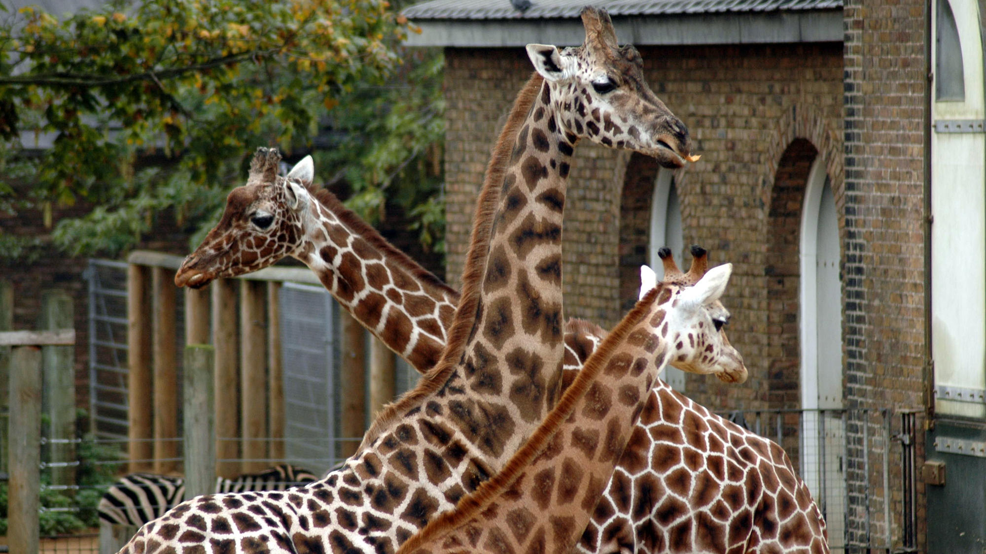 a look at americas zoos the educational entertainment for children Many zoos offer exciting and educational activities and special events  visitors  get a first hand look at how animals behave and interact at night  visiting a zoo  helps children understand the importance of taking care of the.