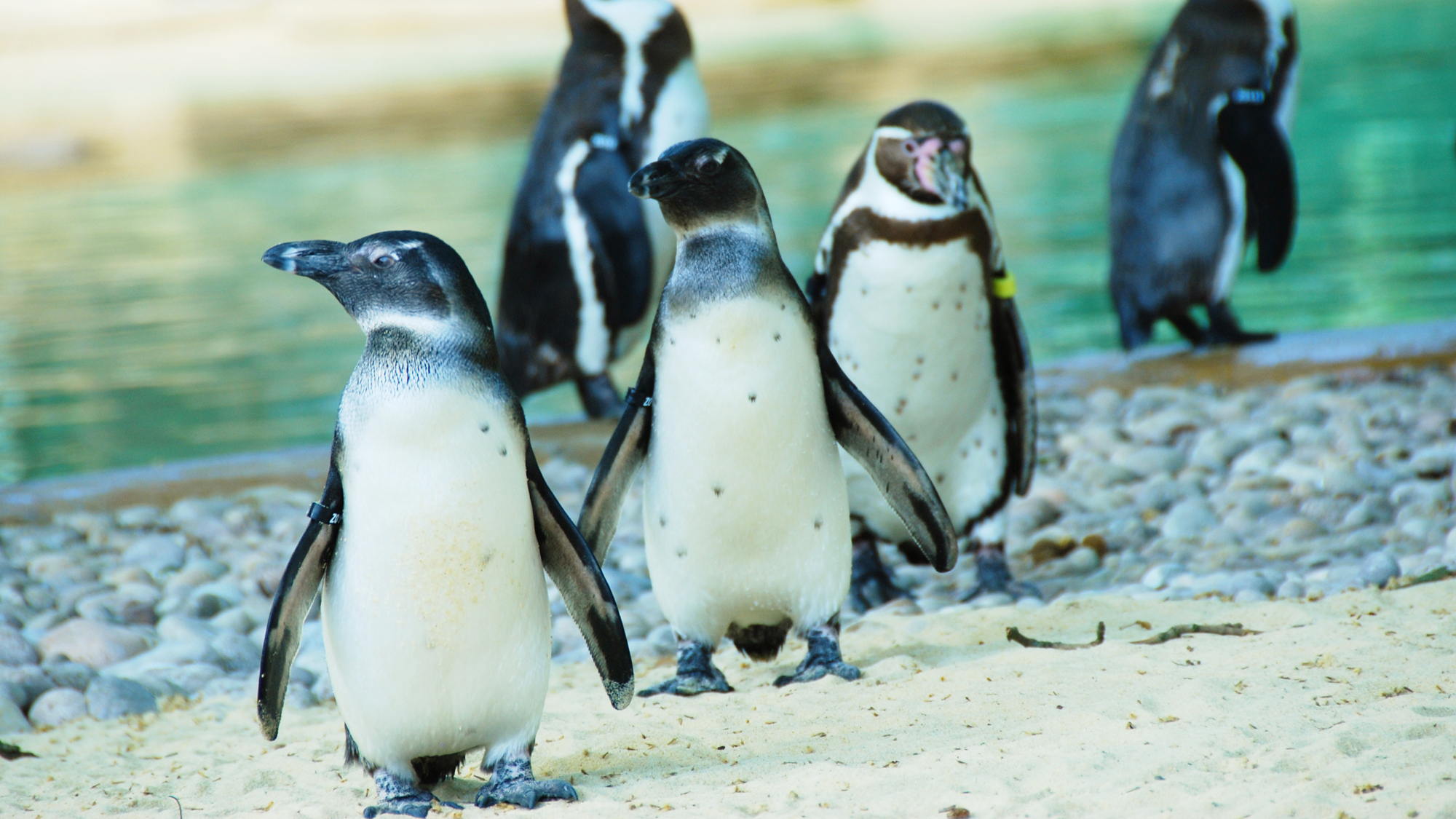 General Information For Group Visits Zoological Society Of - Children's birthday party london zoo