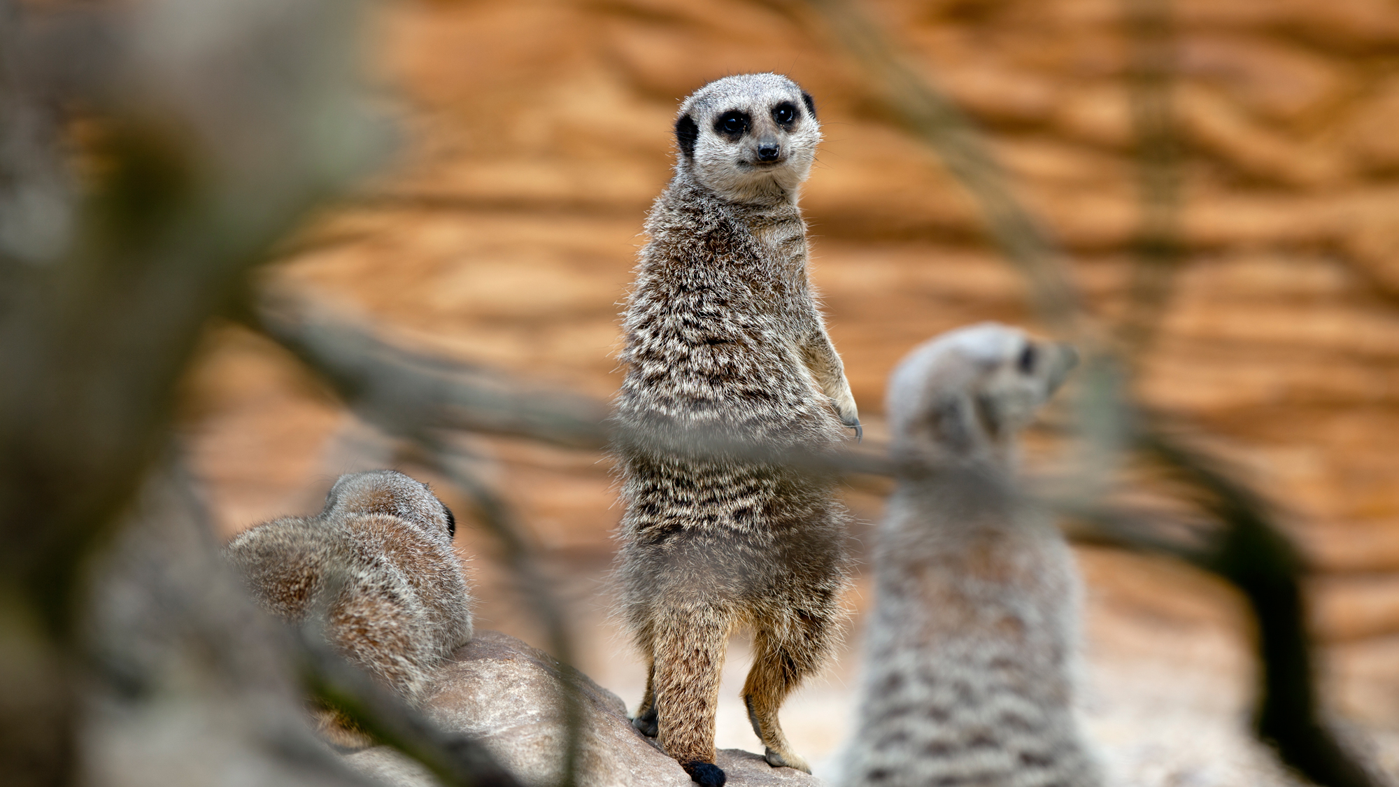 ZSL Whipsnade Zoo Filming Locations - Animals | Zoological ...