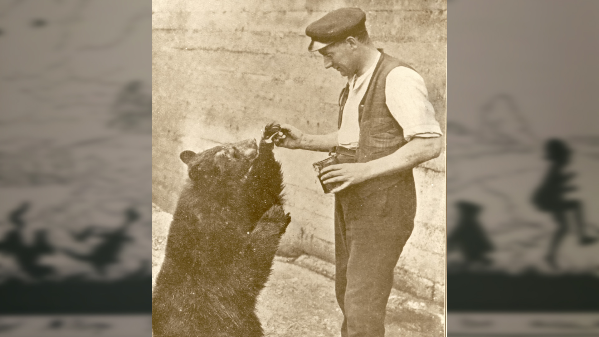 The Bear Who Inspired Winnie The Pooh Zoological Society
