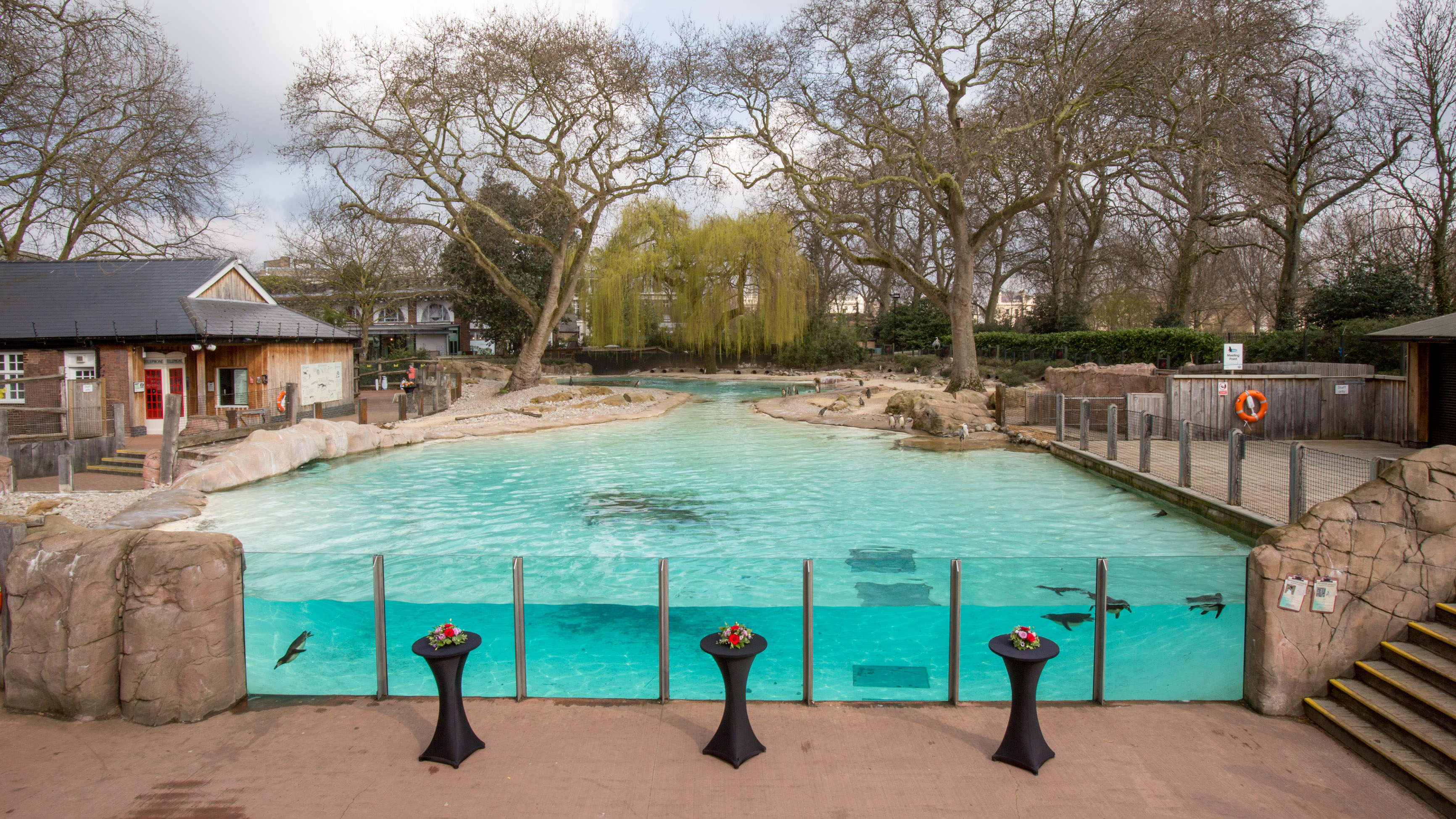 Penguin Beach | Zoological Society of London (ZSL)