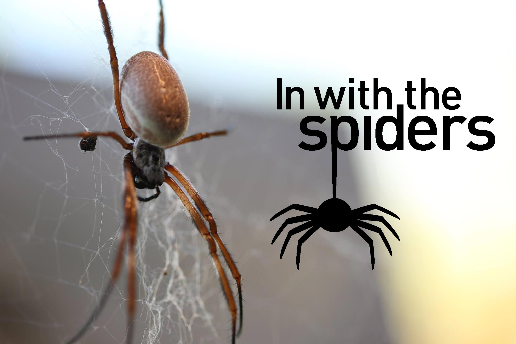Dating sites for spiders