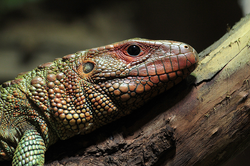 Reptile House | Zoological Society of London (ZSL)