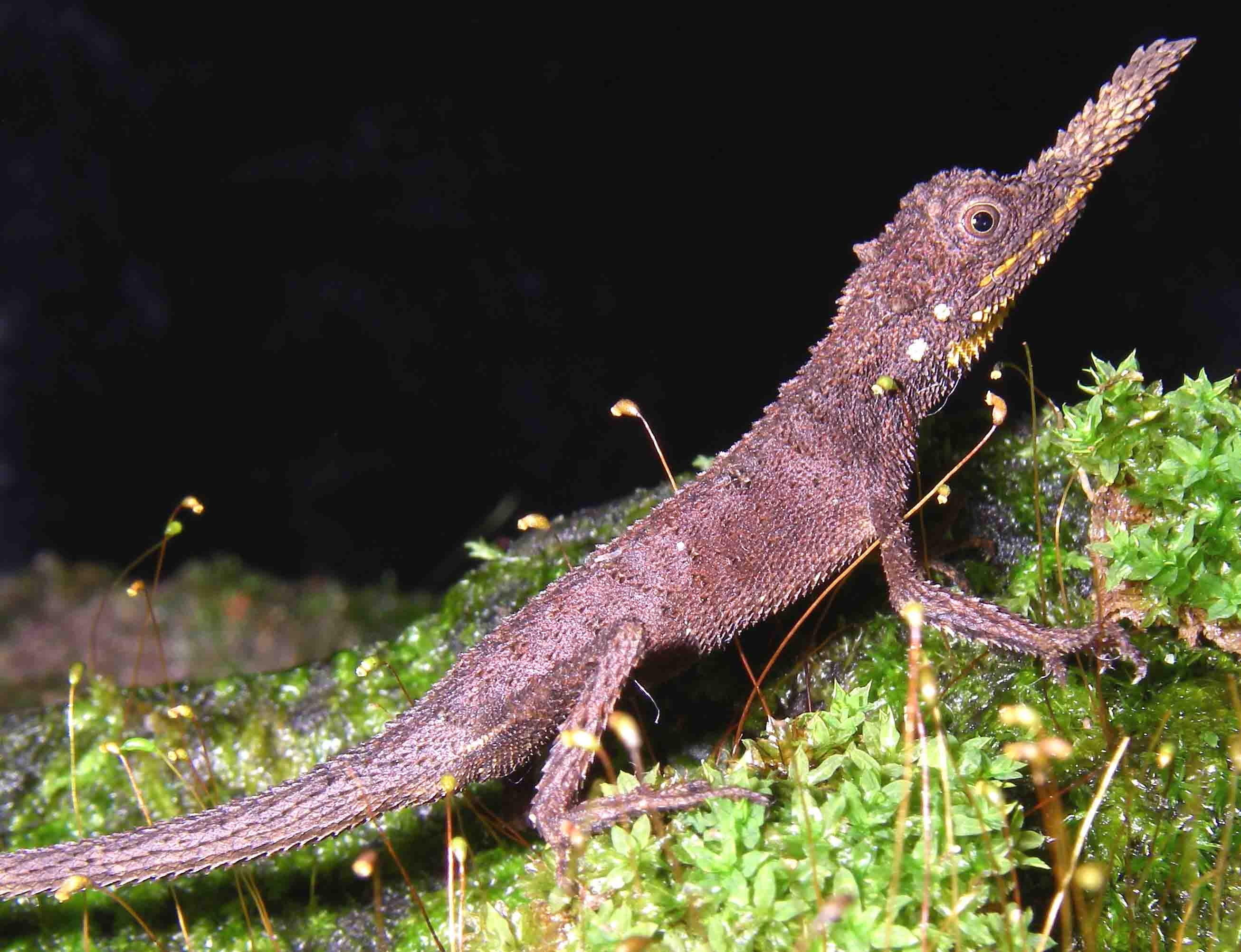 The conservation status of the world's reptiles