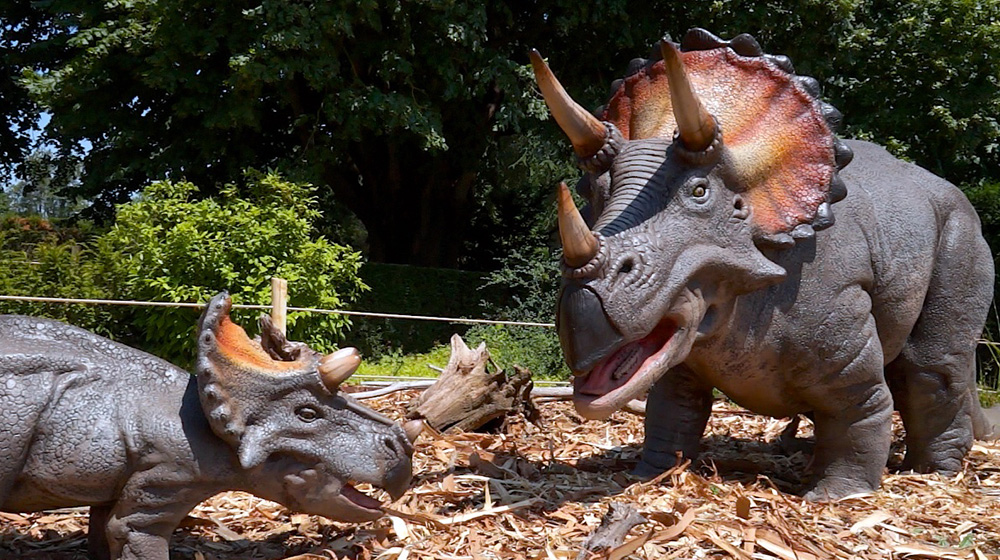Dinosaurs - Triceratops