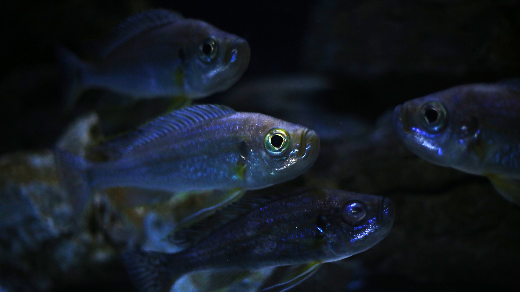 How smart are fish integrating what scientists and for Are fish smart