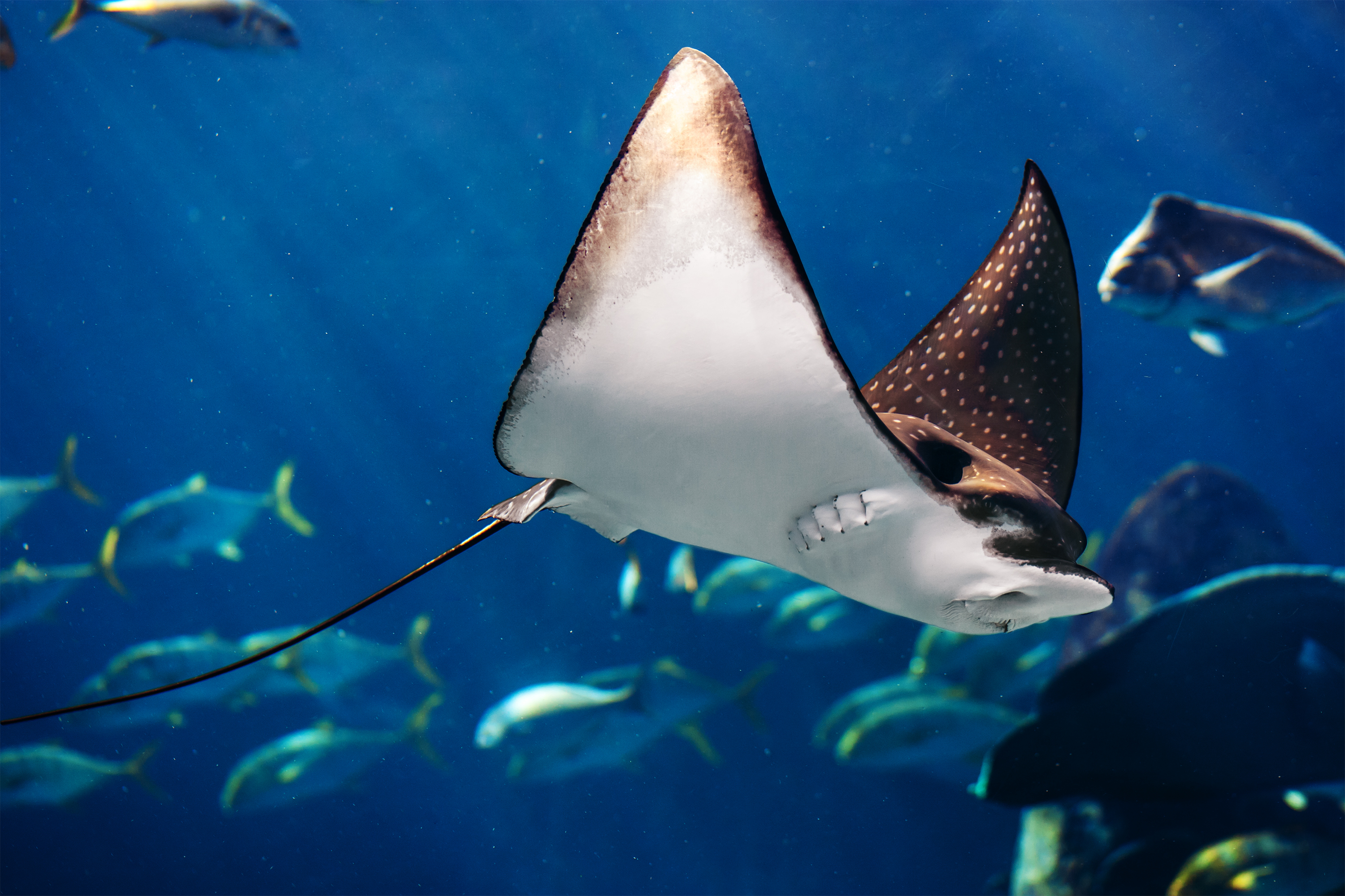 Cites Cop17 A Sea Change For Sharks And Rays