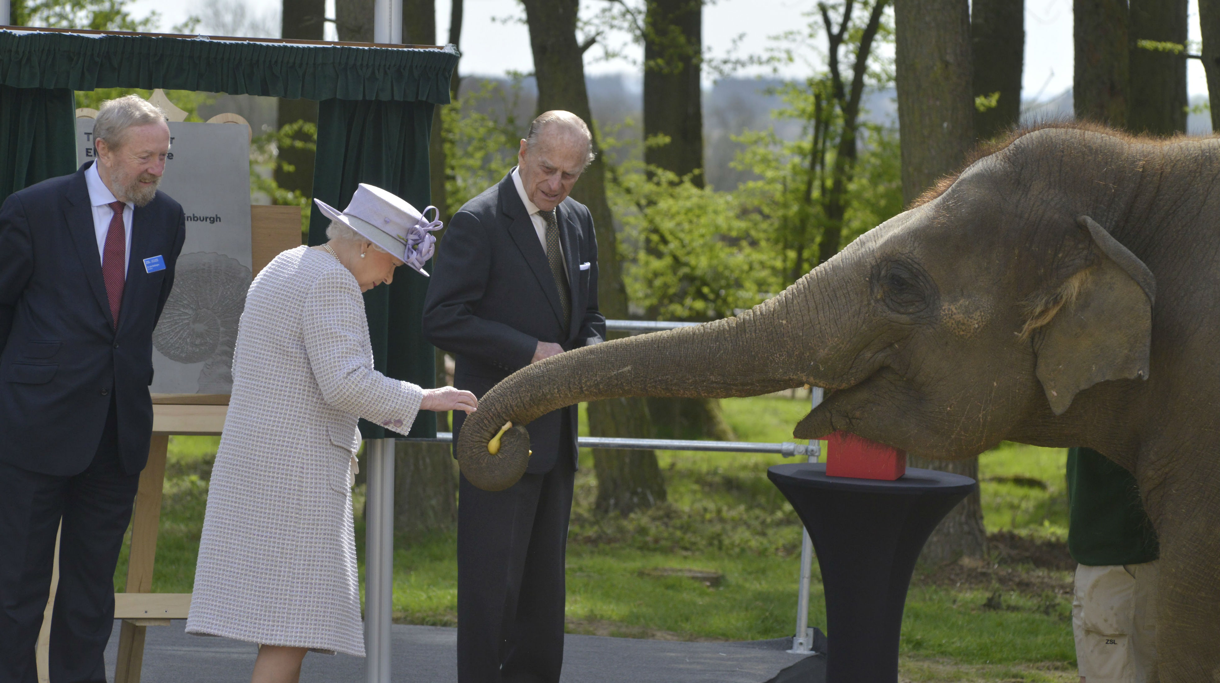 The Queen Helps Feed Elephants at Whipsnade Zoo picture