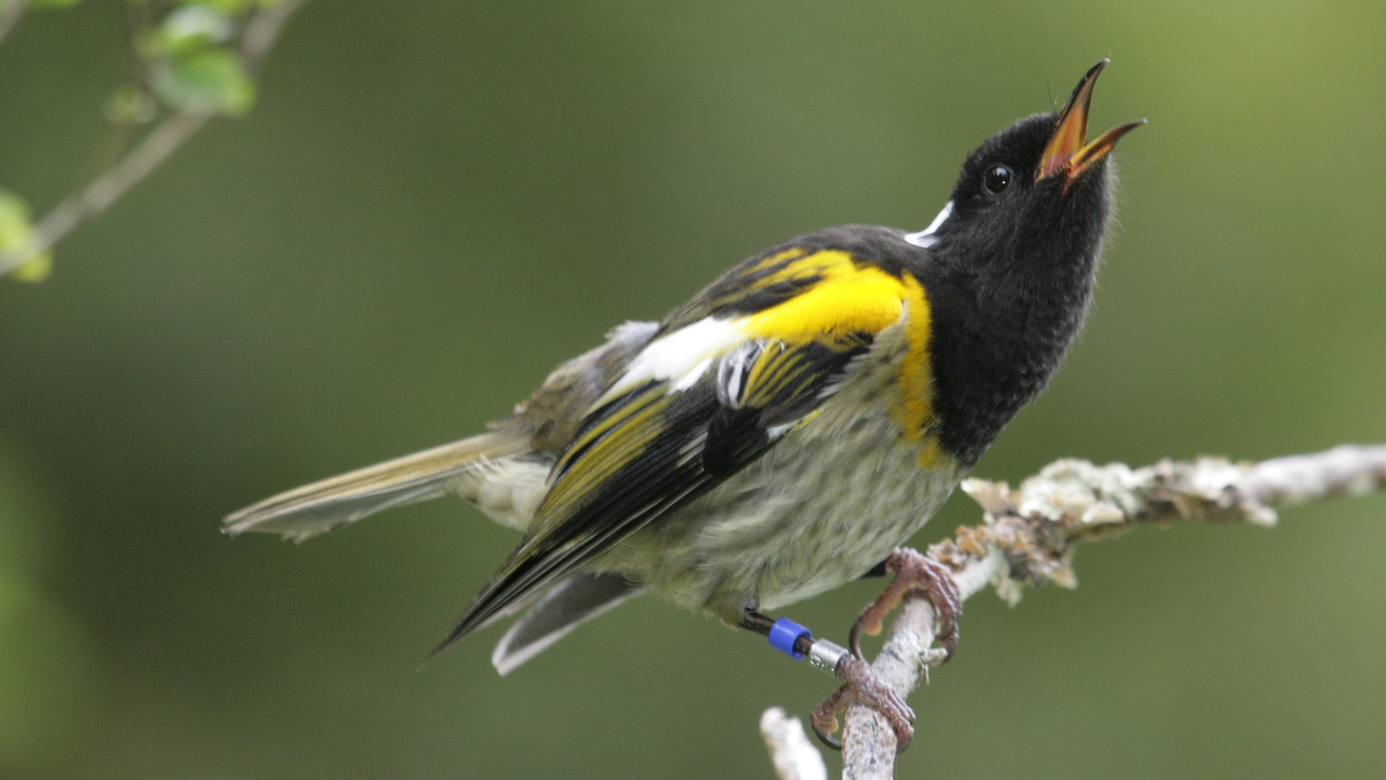 bird behaviour in a changing world with a special focus on bird