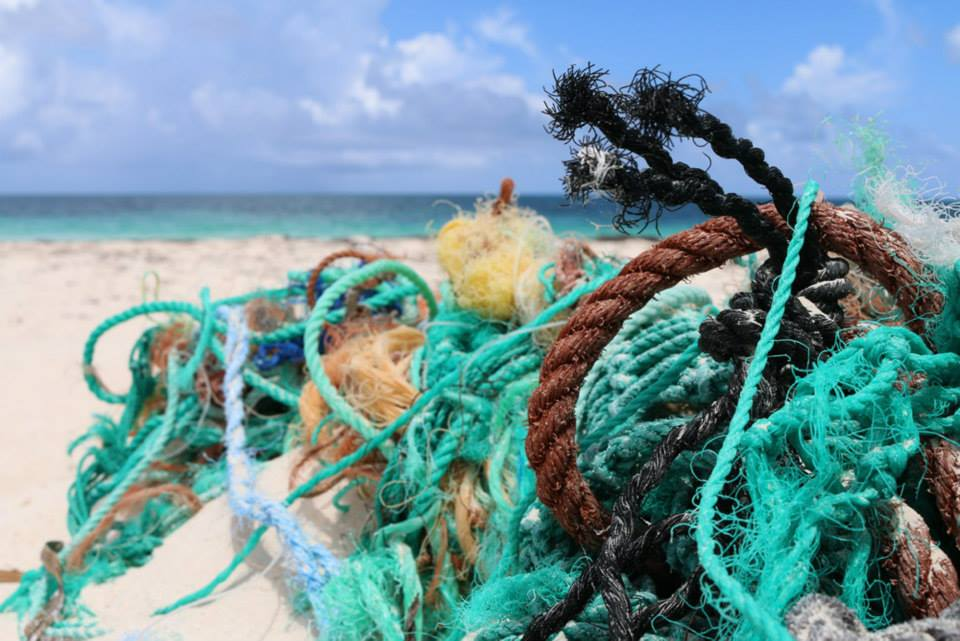 Project Ocean Tackles Plastic Pollution Zoological