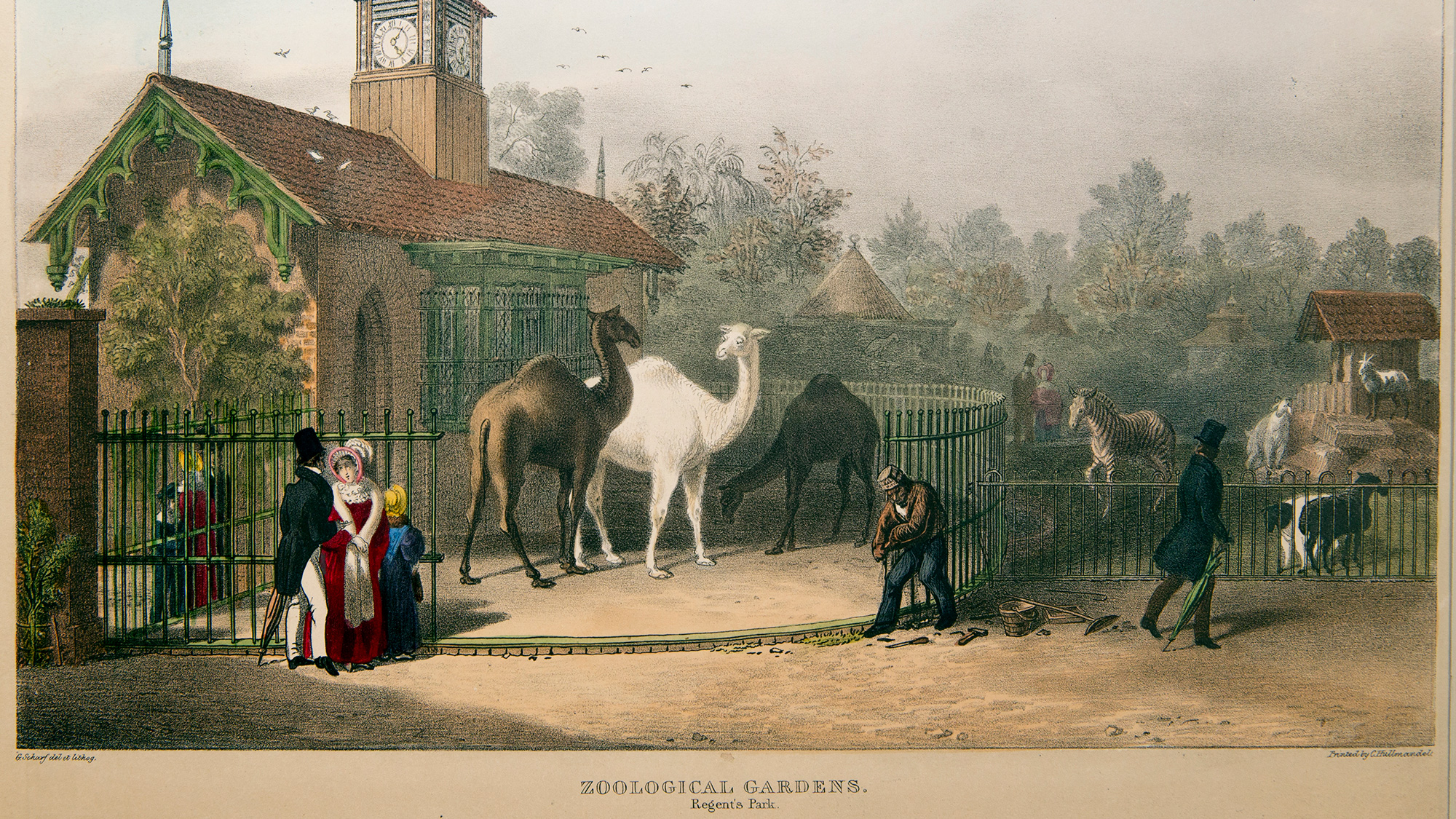 Image result for london zoo 1800s