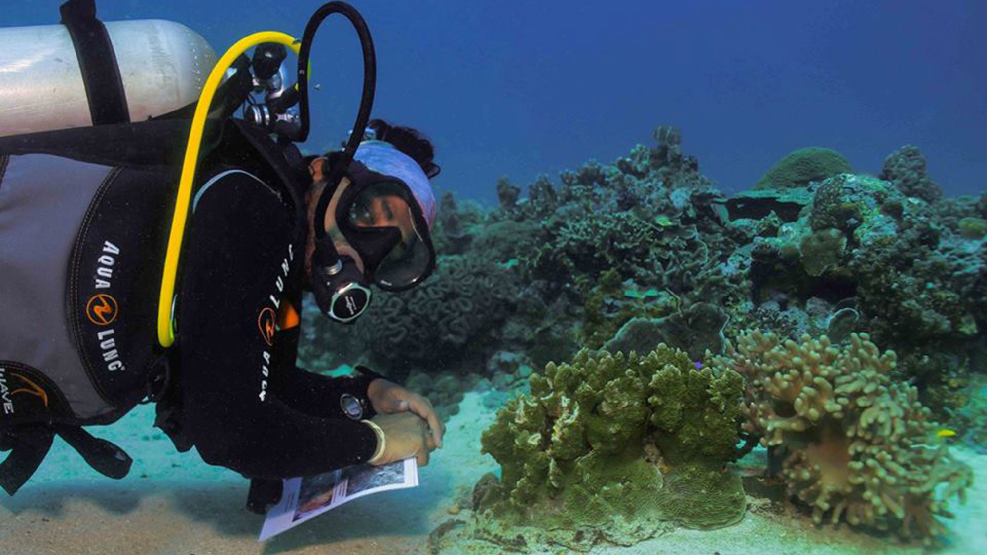 Ahmed has been investigating coral bleaching in the Maldives