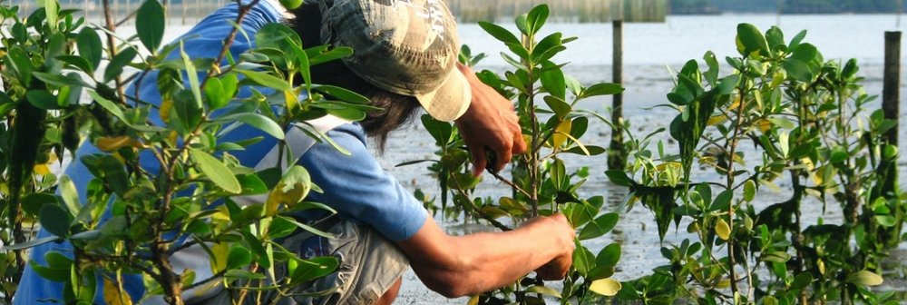 Mangroves-in-the-Philippines.jpg?itok=j-P4V5JS