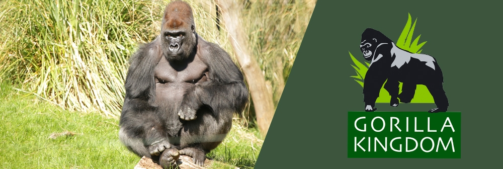 Banner for Gorilla kingdom at ZSL London Zoo