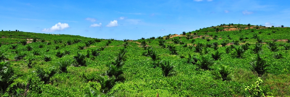 Oil palm plantation banner