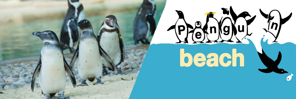 Penguin Beach Banner