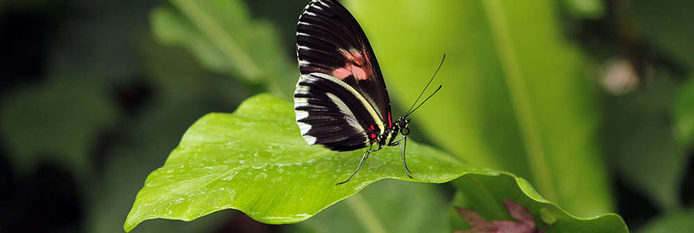 Butterfly Paradise - banner