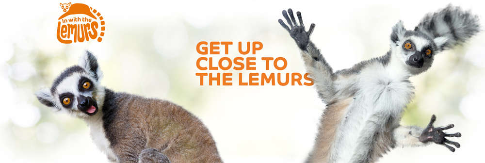 In with the Lemurs banner