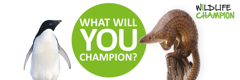 Become a Wildlife Champion