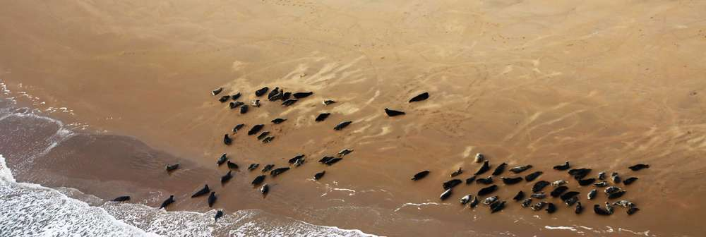 Aerial image from seal survey in Thames Estuary