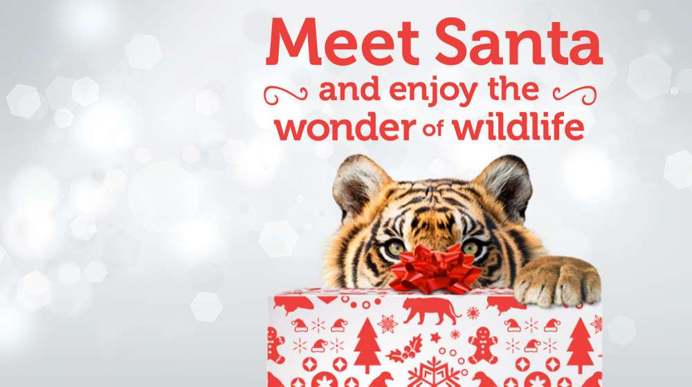 Meet Santa at ZSL London Zoo Christmas 2014