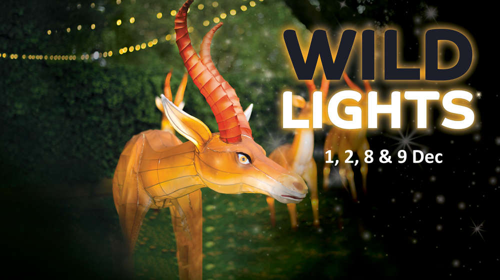 Wild Lights at ZSL Whipsnade Zoo