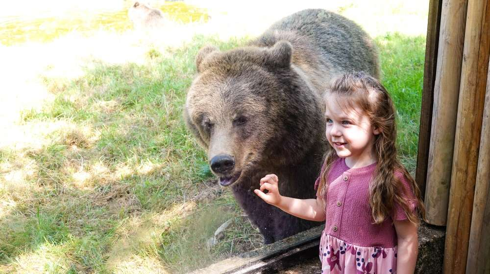 Little girl gets up close and personal with a brown bear at ZSL Whipsnade Zoo