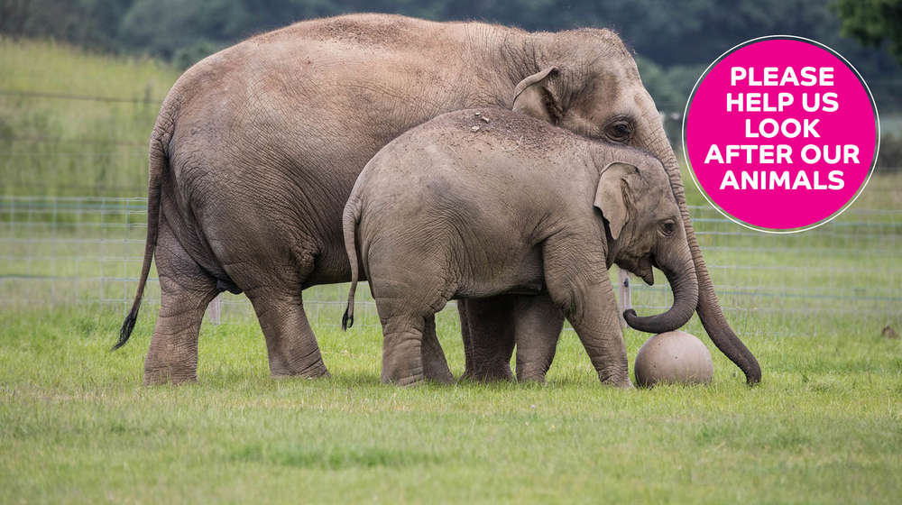 mother and baby elephant in green grass