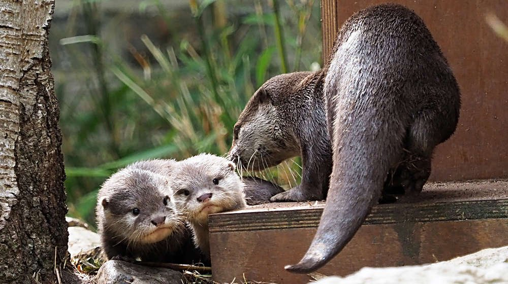 Otter pups Bubble and Squeak