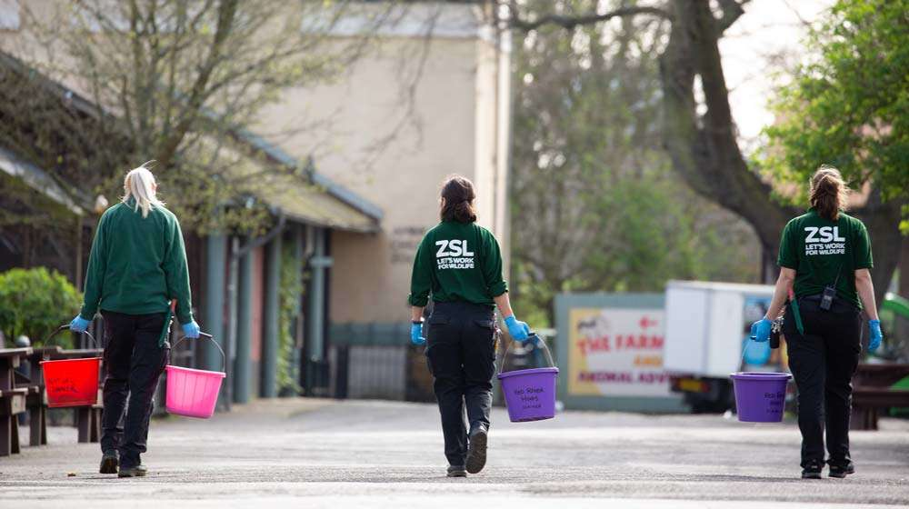 Three keepers observing social distancing while caring for the animals at ZSL London Zoo