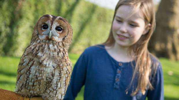 a child an owl at the meet the owls encounter