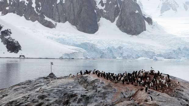 Camera trap test in Antartica