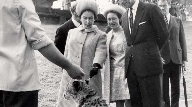 An old picture of Queen Elizabeth meeting a cheetah at ZSL London Zoo