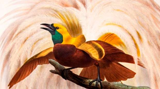 Birds of paradise, by Daniel Giraud Elliot 1873