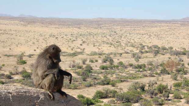 Tsaobis Baboon Project
