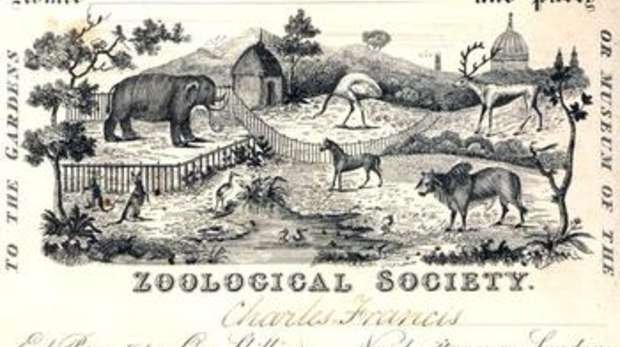 Old ZSL London Zoo ticket from the ZSL Archives