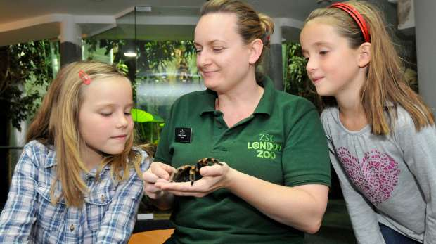 BedBugs experience at ZSL London Zoo