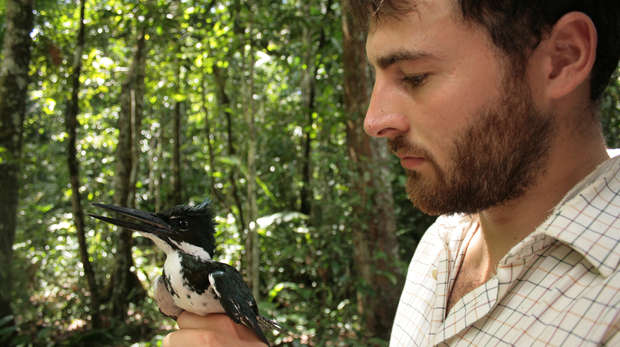 An Amazon kingfisher pictured during one of Conservation Programes's expedition to Guyana, with Rob Pickles.