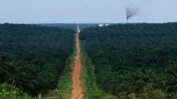 Indonesia - Road through oil palm landscape