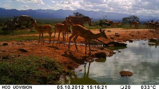 Instant Wild camera trap picture from Kenya