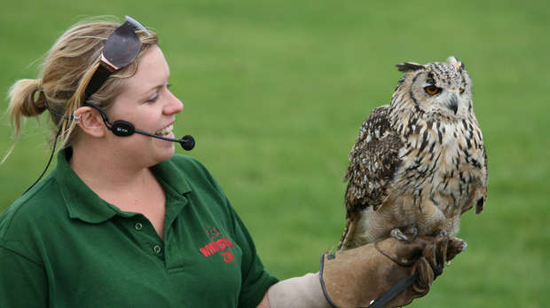 An eagle owl with presenter at ZSL Whipsnade Zoo
