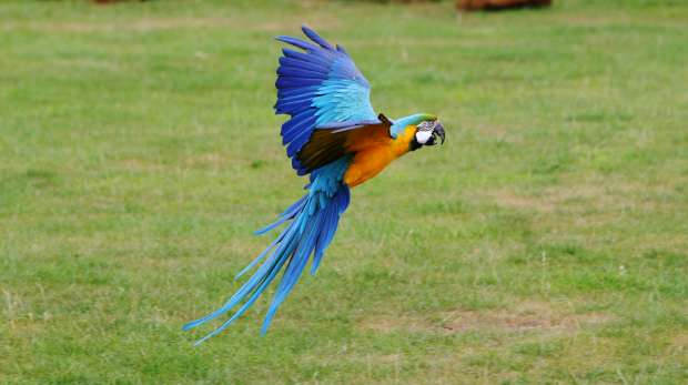 Blue-and-yellow Macaw at ZSL Whipsande Zoo