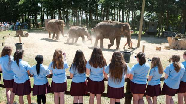 School visit to ZSL Whipsnade Zoo