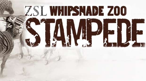 ZSL Whipsnade Zoo Stampede