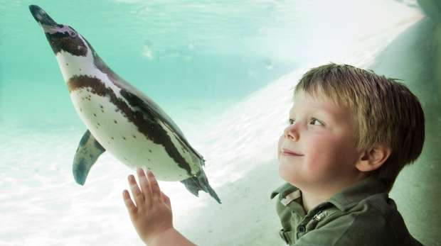 Child looking at penguin at Penguin Beach