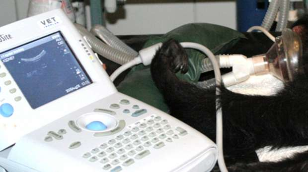 Equipment used by vets at ZSL London Zoo.