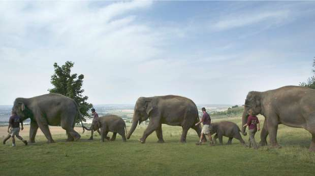 Elephant walk at ZSL Whipsnade Zoo