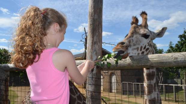 Meet the Giraffes experience at ZSL London Zoo